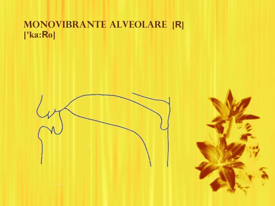 Monovibrante alveolare [R] [ ka:Ro]